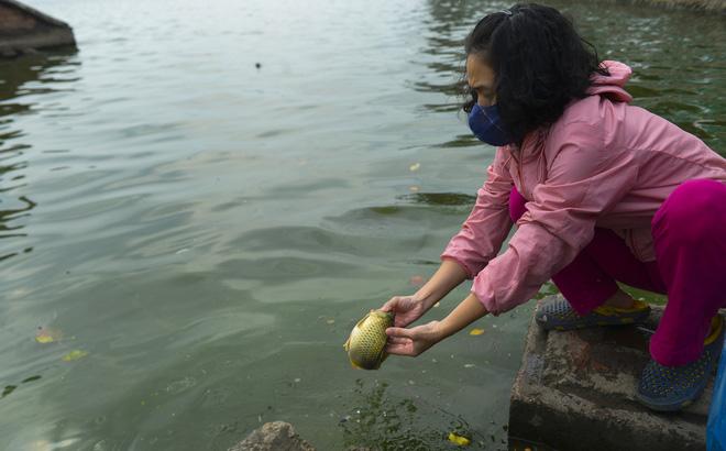 Người phụ nữ thả 3 con cá chép nặng gần 3kg xuống Hồ Tây tiễn ông Công, ông Táo về trời sớm - Ảnh 6.