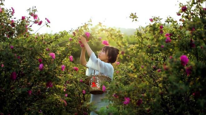 'Tiên nữ đồng quê' Lý Tử Thất lập kỷ lục Guinness với loạt video 'cổ phong mỹ thực' - Ảnh 3.
