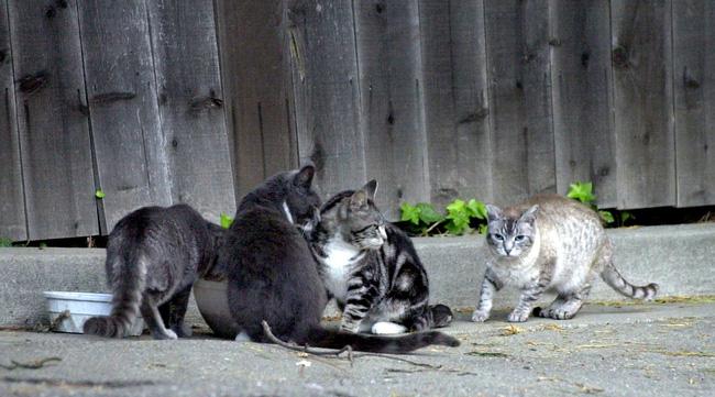 Đi đường thấy đàn mèo quanh rãnh nước, người phụ nữ đến gần phát hiện 1 đứa trẻ nhưng khó tin hơn là hành động của chúng với em bé - Ảnh 1.