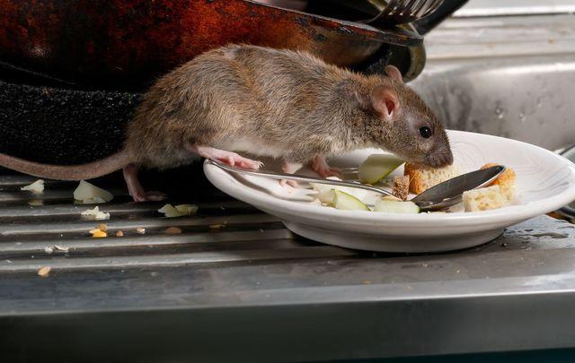 Cách làm bẫy chuột cực dễ, bách phát bách trúng từ lồng của 1 chiếc quạt điện hỏng - Ảnh 1.