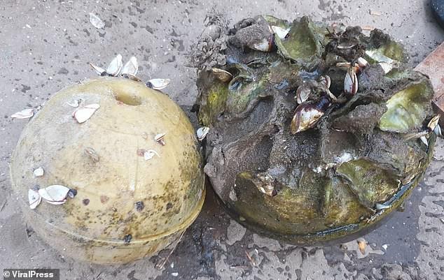 Đi bắt ốc ở bờ biển, ngư dân Thái Lan thấy 1 chiếc phao cứu hộ thì nhặt về, không ngờ đổi đời - Ảnh 1.