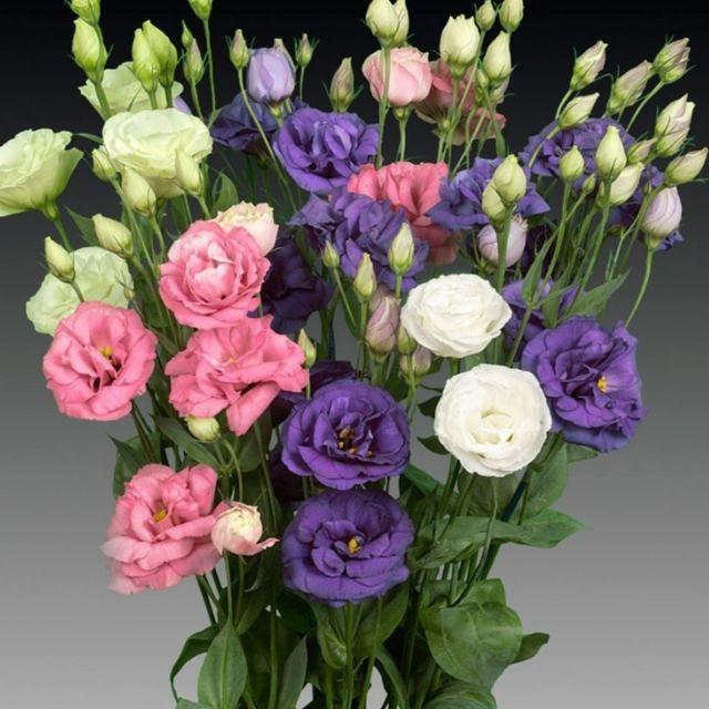 5 loại hoa cắm bàn thờ dịp Tết hút tài lộc, may mắn trong năm mới - Ảnh 5.