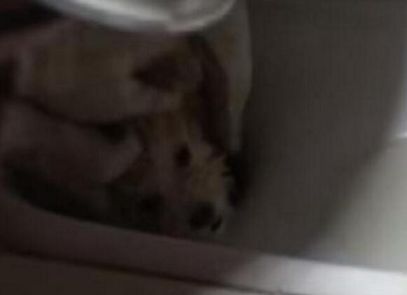 Vừa vào nhà vệ sinh đã phát hiện âm thanh lạ và 1... đôi mắt trong bồn cầu, người phụ nữ sợ đứng tim, thất thanh gọi chồng  - Ảnh 3.