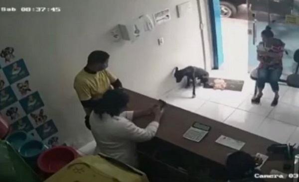 Ngỡ ngàng chú chó hoang tự biết vào phòng khám thú y khi bị thương - Ảnh 1.