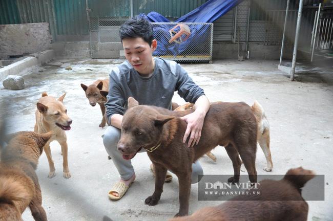 CLIP: Cận cảnh chú chó được ví như thần may mắn của người Mông huyện biên giới, trị giá 200 triệu đồng - Ảnh 2.