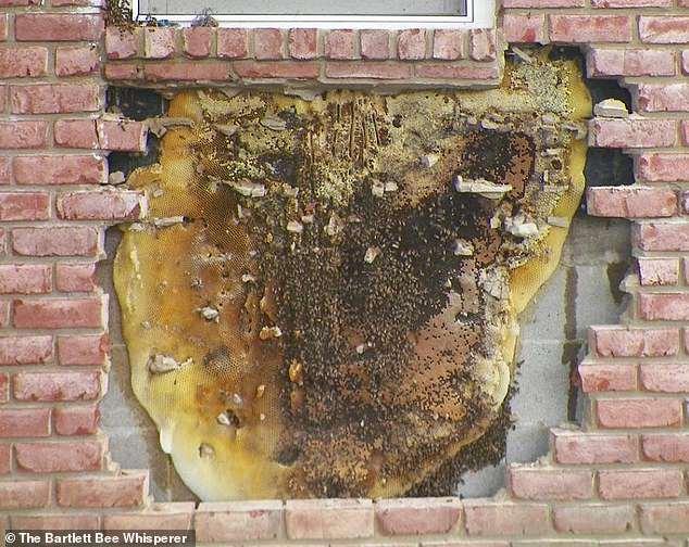 Khó chịu vì tường phát ra tiếng ồn, chủ nhà gọi thợ đến kiểm tra và rùng mình với thứ tìm được - Ảnh 5.