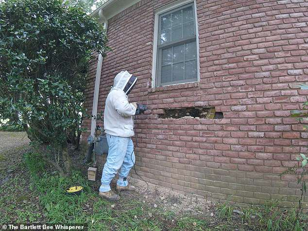 Khó chịu vì tường phát ra tiếng ồn, chủ nhà gọi thợ đến kiểm tra và rùng mình với thứ tìm được - Ảnh 3.