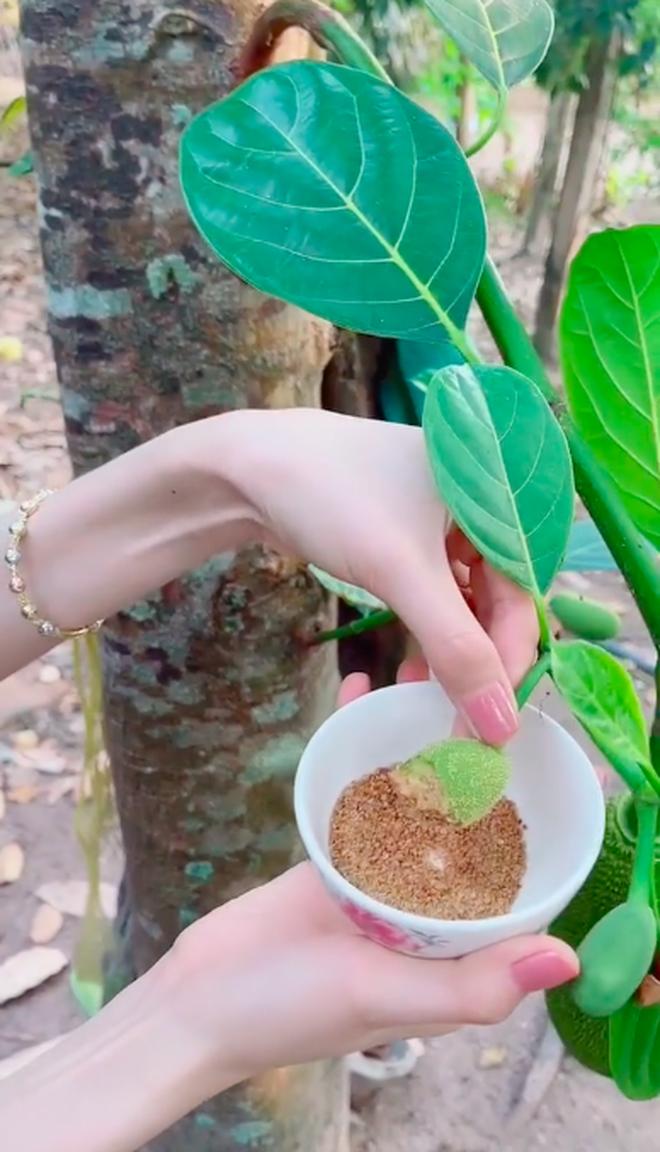 Cô gái xơi tái quả mít non trên cây khiến dân mạng sửng sốt, còn không quên lêu lêu mấy bạn Sài Gòn vì không biết ăn món này - Ảnh 4.