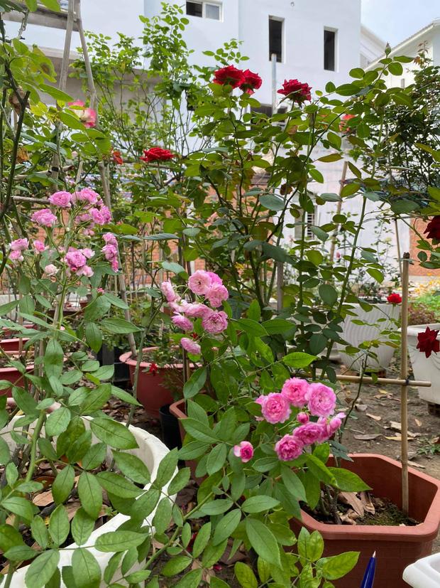 Biệt thự của Quý Bình và bà xã doanh nhân: Hoa phủ kín lối đi, mảnh vườn lớn là ao ước của nhiều người - Ảnh 5.