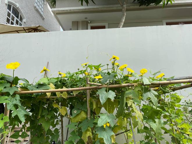 Biệt thự của Quý Bình và bà xã doanh nhân: Hoa phủ kín lối đi, mảnh vườn lớn là ao ước của nhiều người - Ảnh 6.