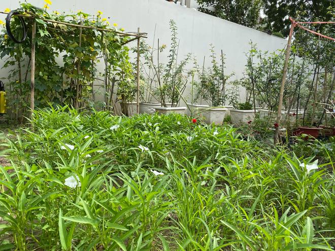 Biệt thự của Quý Bình và bà xã doanh nhân: Hoa phủ kín lối đi, mảnh vườn lớn là ao ước của nhiều người - Ảnh 7.