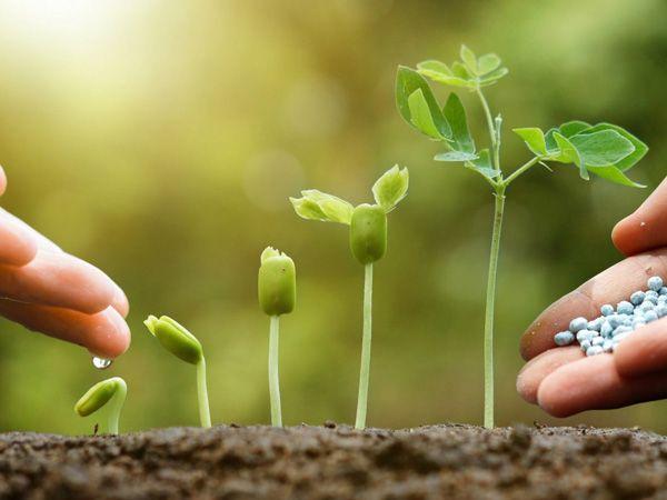 Trồng cây gì thì hái được quả nấy: Người nuôi dưỡng 3 viên ngọc quý này sẽ được phúc báo cả đời - Ảnh 1.