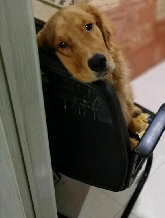 Chó cưng đứng chặn ở cửa, nhất định không cho chủ ra ngoài, lý do phía sau khiến bao người cảm động - Ảnh 2.