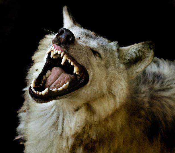 """Câu chuyện kỳ quái về """"người chó"""" ám ảnh một người đàn ông cả cuộc đời - ảnh 1"""