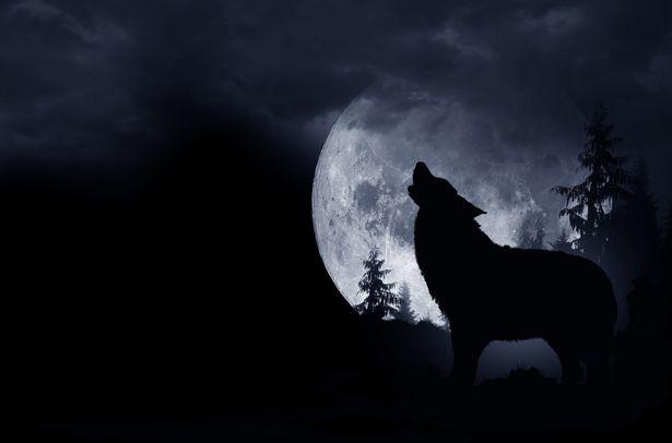 """Câu chuyện kỳ quái về """"người chó"""" ám ảnh một người đàn ông cả cuộc đời - ảnh 5"""
