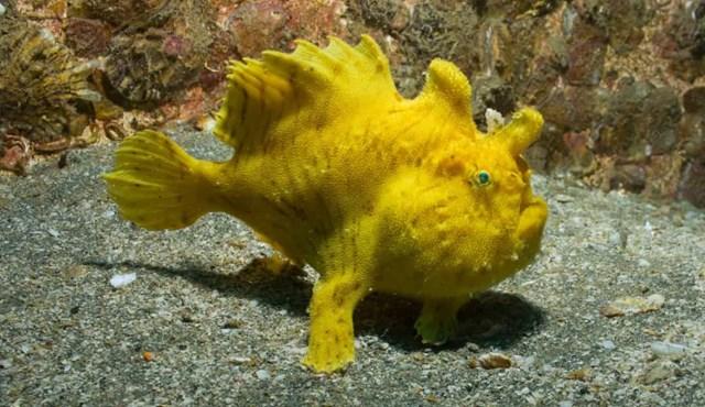 Sự thật đáng kinh ngạc về các sinh vật dưới biển sâu - Ảnh 1.