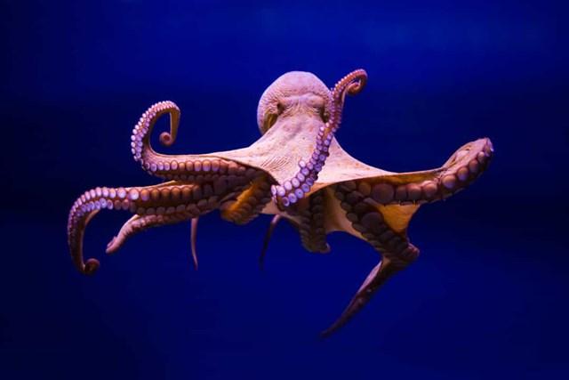Sự thật đáng kinh ngạc về các sinh vật dưới biển sâu - Ảnh 2.