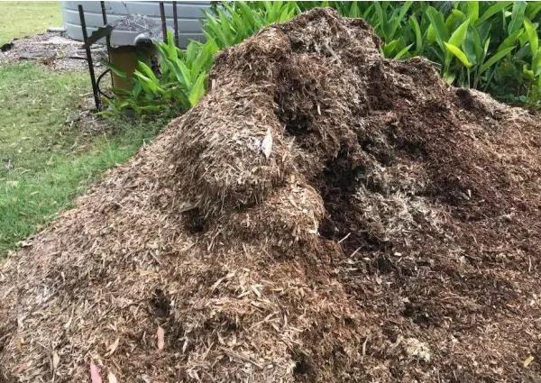 Đống cỏ khô bỗng dưng động đậy, chủ nhà lại gần kiểm tra rồi chạy vội vì thấy thứ này - Ảnh 1.