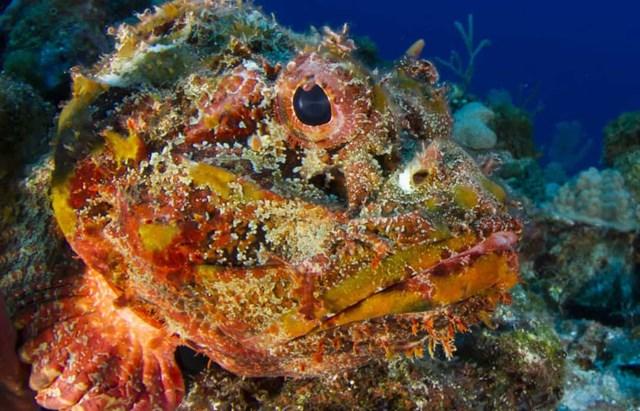 Sự thật đáng kinh ngạc về các sinh vật dưới biển sâu - Ảnh 11.