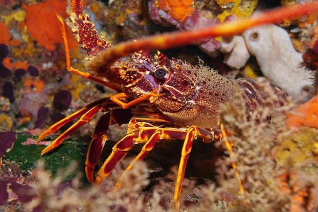 Sự thật đáng kinh ngạc về các sinh vật dưới biển sâu - Ảnh 12.