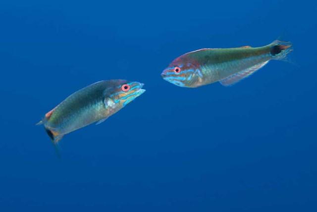 Sự thật đáng kinh ngạc về các sinh vật dưới biển sâu - Ảnh 16.