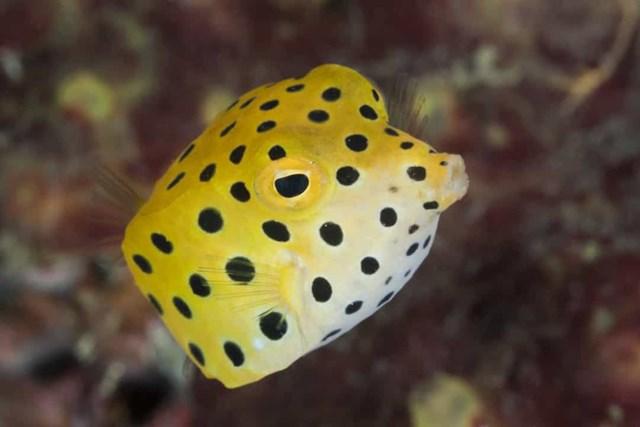 Sự thật đáng kinh ngạc về các sinh vật dưới biển sâu - Ảnh 17.