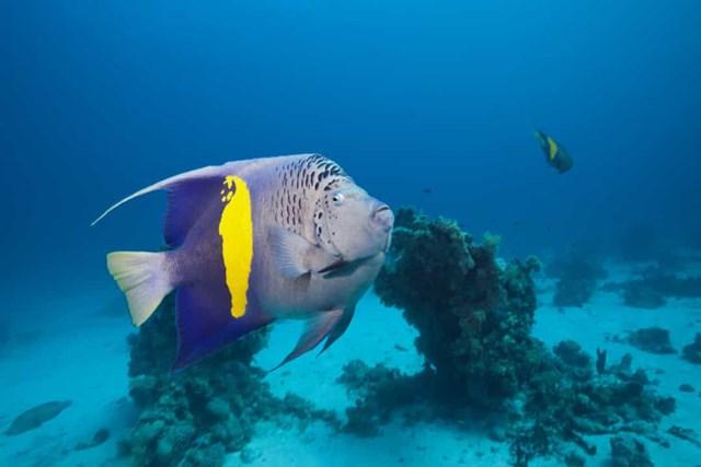 Sự thật đáng kinh ngạc về các sinh vật dưới biển sâu - Ảnh 18.