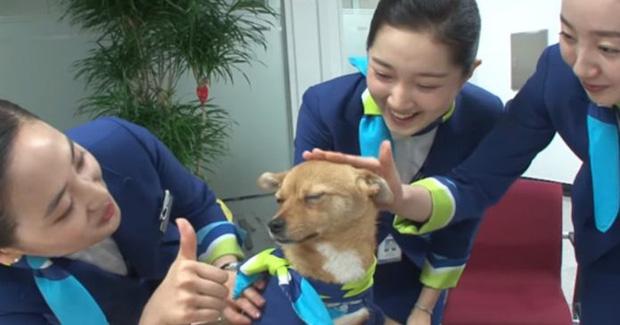 Chú chó mê gái khét tiếng ở sân bay Hàn Quốc: Thấy tiếp viên nữ là sấn sổ bổ nhào, gặp tiếp viên nam thì thờ ơ tránh né - Ảnh 4.