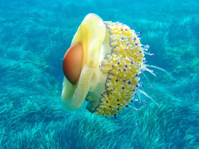 Sự thật đáng kinh ngạc về các sinh vật dưới biển sâu - Ảnh 24.