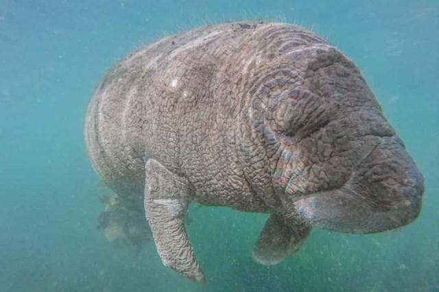 Sự thật đáng kinh ngạc về các sinh vật dưới biển sâu - Ảnh 25.