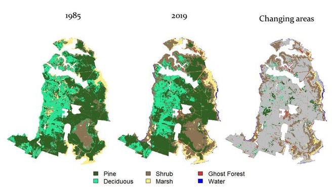 Thứ gì đó đang giết chết cây cối, biến những khu rừng ở bờ đông nước Mỹ thành rừng ma - Ảnh 4.