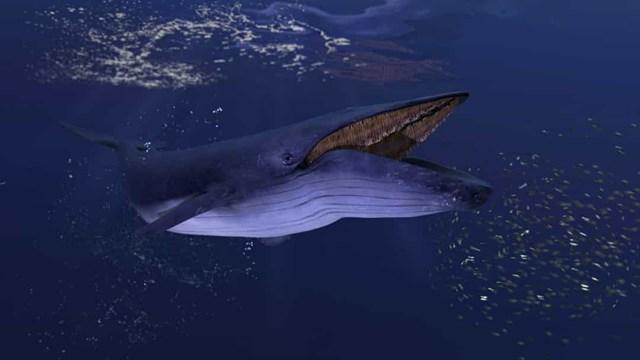 Sự thật đáng kinh ngạc về các sinh vật dưới biển sâu - Ảnh 8.