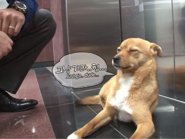 Chú chó mê gái khét tiếng ở sân bay Hàn Quốc: Thấy tiếp viên nữ là sấn sổ bổ nhào, gặp tiếp viên nam thì thờ ơ tránh né - Ảnh 9.