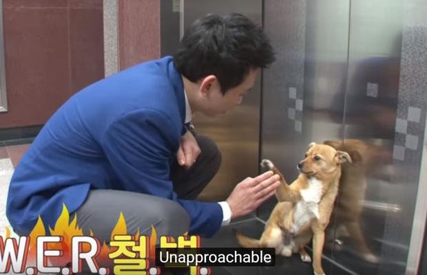 Chú chó mê gái khét tiếng ở sân bay Hàn Quốc: Thấy tiếp viên nữ là sấn sổ bổ nhào, gặp tiếp viên nam thì thờ ơ tránh né - Ảnh 10.