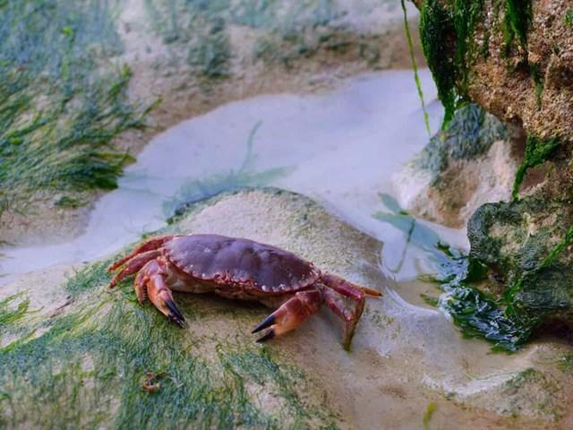 Sự thật đáng kinh ngạc về các sinh vật dưới biển sâu - Ảnh 10.