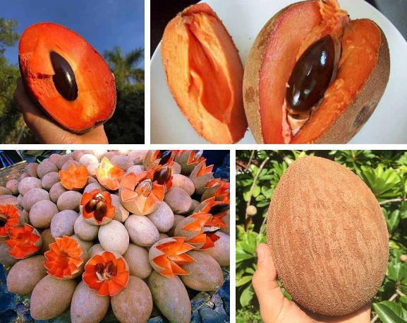 Xuất hiện loại quả to như dừa, vỏ màu nâu, bổ ra ruột lại như đu đủ, đố ai biết quả gì? - Ảnh 3.