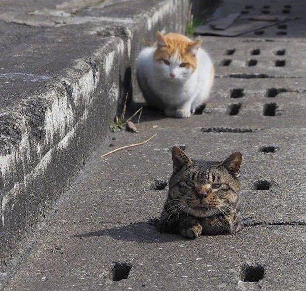 Thấy đồng bọn không may bị lọt cống, bầy mèo hoang có hành động phũ phàng khiến dân mạng cười ngả nghiêng - Ảnh 1.