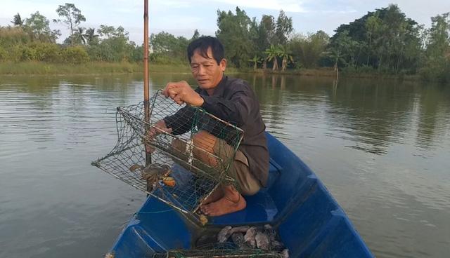 Sau vụ chết bất thường, cua biển ngon nhất miền Tây giảm 100.000 đồng/kg - Ảnh 1.