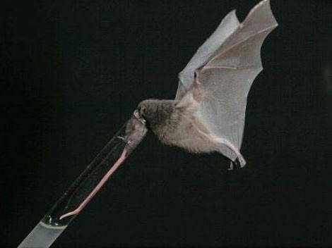 1001 thắc mắc: Động vật có chiếc lưỡi dài kỳ quái nhất hành tinh?  - Ảnh 1.
