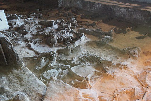Ngôi mộ đế vương chôn theo 600 con chiến mã: Kiểm tra hộp sọ bất ngờ phát hiện 'sốc' 002