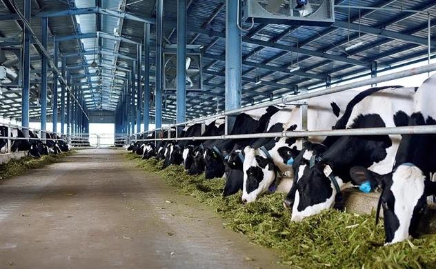 Doanh nghiệp sữa tỷ đô của Việt Nam mua trang trại tại nước ngoài - Ảnh 1.