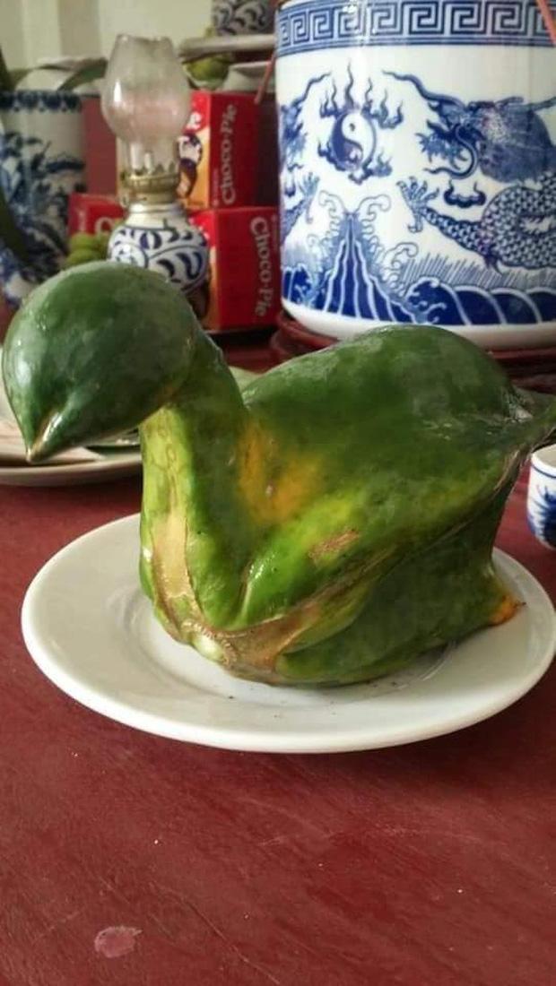 Quả đu đủ hiếm thấy nhất Việt Nam, uốn éo thành hình nguyên con gà luộc, nhiều người bảo phải chi nhân được giống thì mỗi dịp cúng kiếng đắt khách phải biết - Ảnh 1.