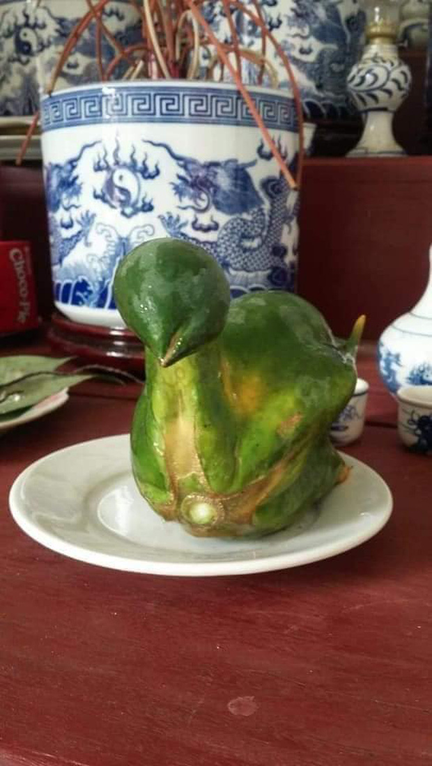 Quả đu đủ hiếm thấy nhất Việt Nam, uốn éo thành hình nguyên con gà luộc, nhiều người bảo phải chi nhân được giống thì mỗi dịp cúng kiếng đắt khách phải biết - Ảnh 2.