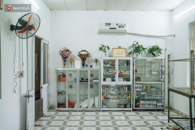 Bên trong phòng khám chữa bệnh, châm cứu miễn phí cho chó mèo ở Hà Nội: Ngoan, bà thương... - Ảnh 3.
