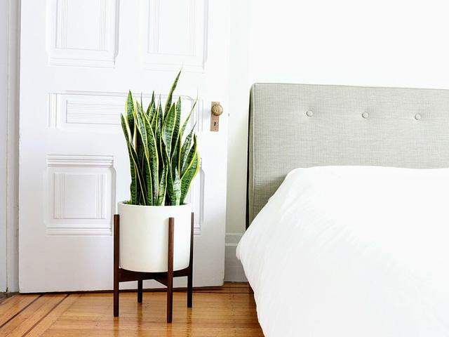 7 loại cây cảnh NÊN đặt trong phòng ngủ vừa tốt cho sức khỏe vừa hợp phong thủy - Ảnh 3.