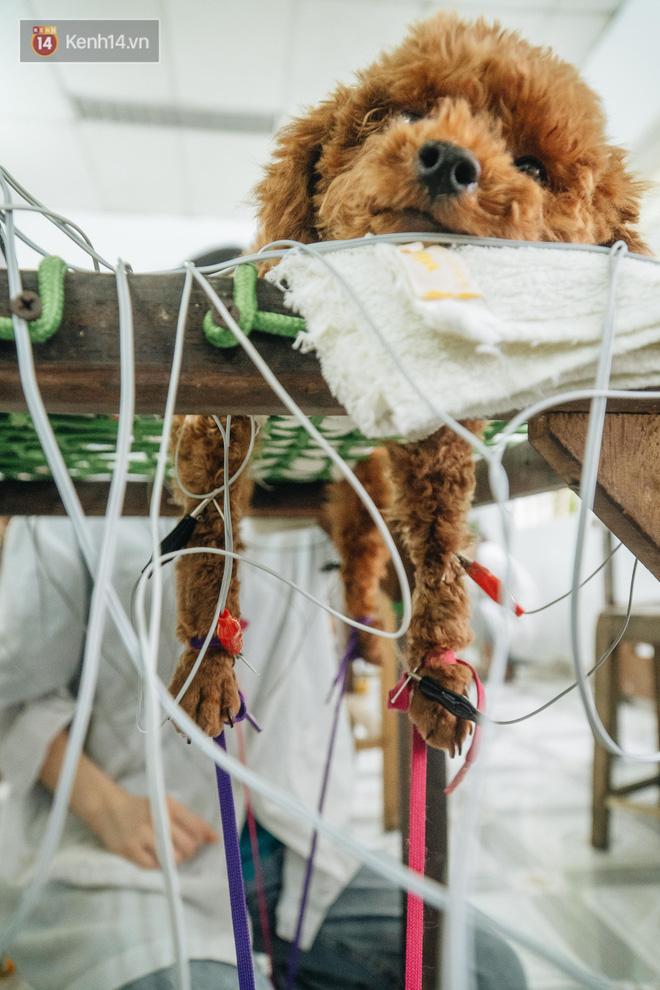 Bên trong phòng khám chữa bệnh, châm cứu miễn phí cho chó mèo ở Hà Nội: Ngoan, bà thương... - Ảnh 20.