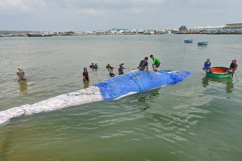 Một số hình ảnh đưa cá voi nặng hơn 4 tấn vào bờ - Ảnh 3.