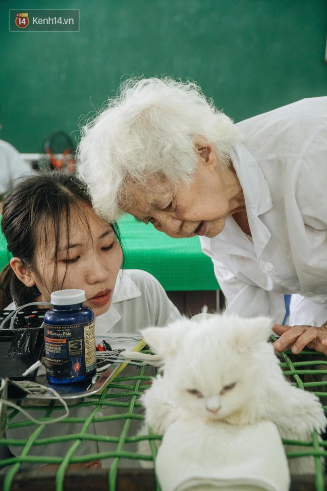 Bên trong phòng khám chữa bệnh, châm cứu miễn phí cho chó mèo ở Hà Nội: Ngoan, bà thương... - Ảnh 27.