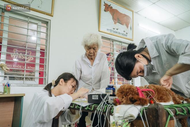 Bên trong phòng khám chữa bệnh, châm cứu miễn phí cho chó mèo ở Hà Nội: Ngoan, bà thương... - Ảnh 28.