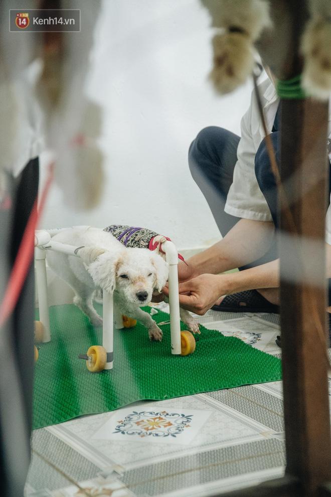 Bên trong phòng khám chữa bệnh, châm cứu miễn phí cho chó mèo ở Hà Nội: Ngoan, bà thương... - Ảnh 30.